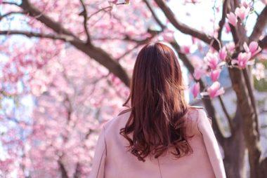 桜 女性の後ろ姿